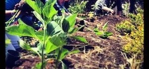 Students planting a school perennial food forest garden.