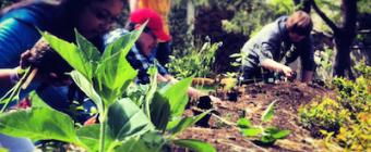 Students plant perennials in a school garden in Edmonton, Alberta.