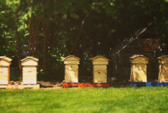 Handcrafted Beehives