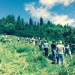 Edmonton River Valley Food Forest Installation