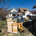 Dustin Bajer, Backyard Beehives Edmonton Alberta
