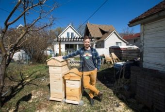 The Hive Next Door: What To Do When Honeybees Move In