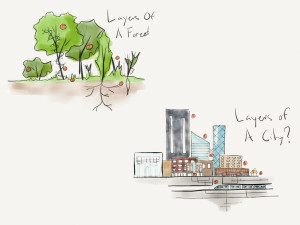 Layers of an ecosystem (forest). Layers of a City. Biophilic Cities