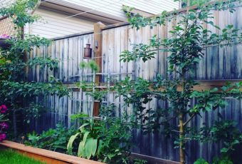 Save Space and Increase Your Yield With Espalier Fruit Trees