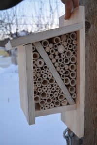 The Alberta Birdhouse modified into a beneficial bug hotel. Sides of birdhouse are removed and 4-inch sections of bamboo are inserted to provide habitat for native bee species and ladybugs.