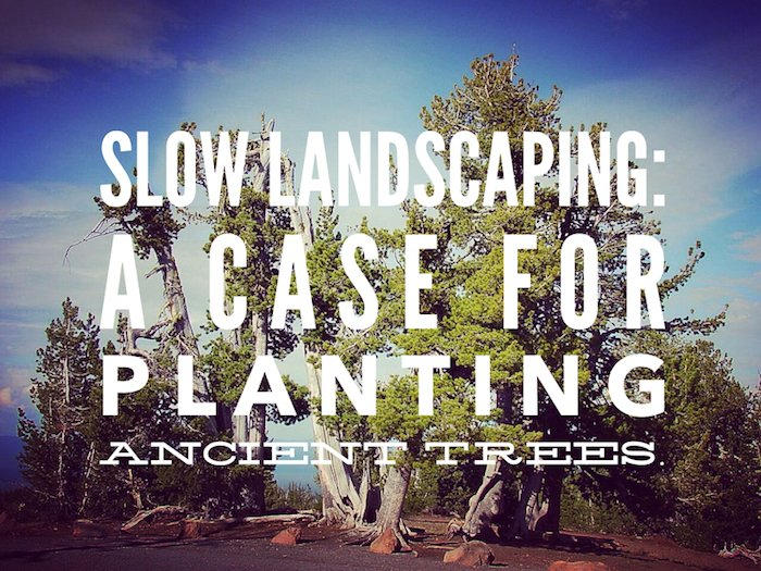 Slow Landscaping: A case for planting ancient trees.