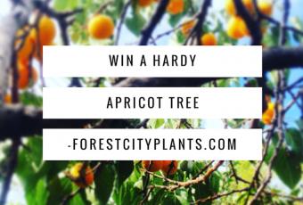 Win A Hardy Capilano Apricot Tree