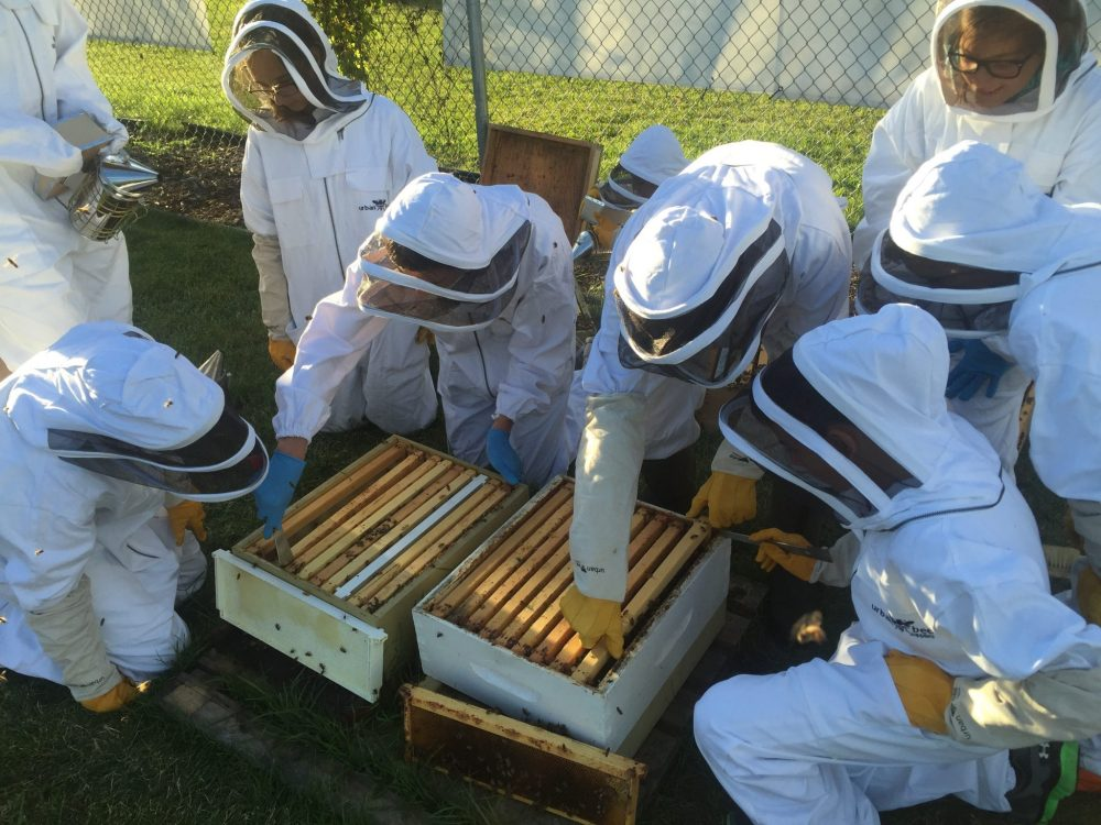 Northlands beekeeping club members removing the frames and inspection two hives.