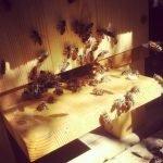 Warre Hive, Top Bar Hive, Honeybees,
