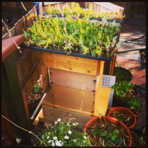 Edmonton Beekeeping. An urban beehive with a green roof
