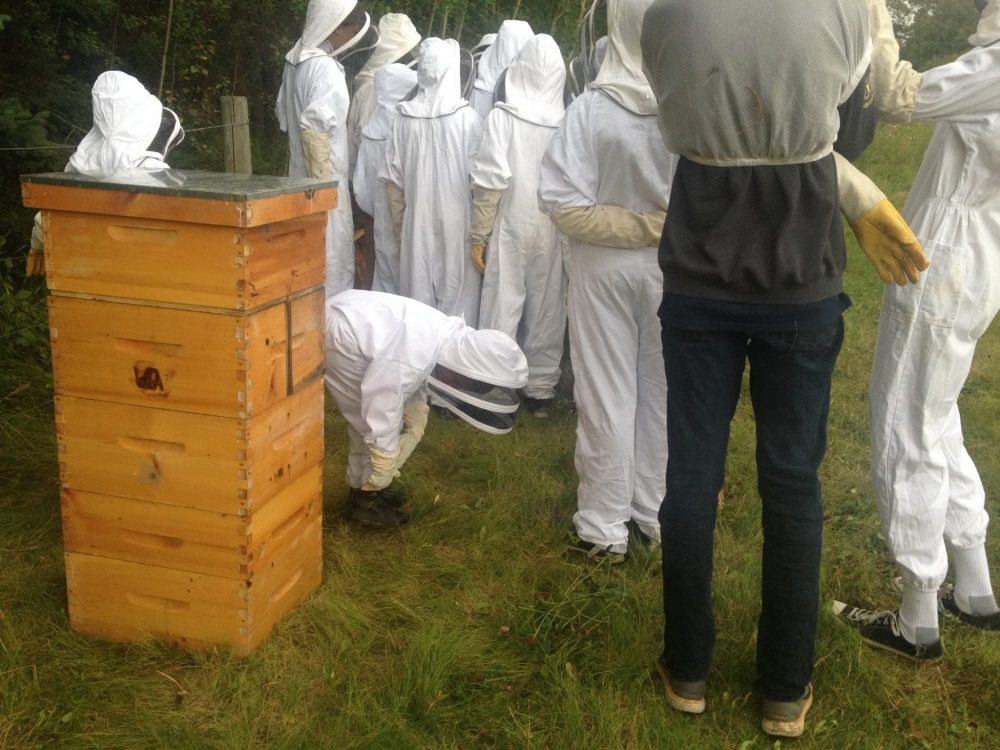 Northlands Youth Beekeeping Club members learn about making nucs from the Alberta Nuc Expert.