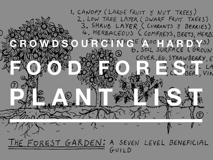 A crowdsourced list of hardy food forest plants. Zone 4 or colder. Permaculture plant list.